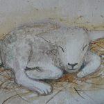 cd35spring lamb